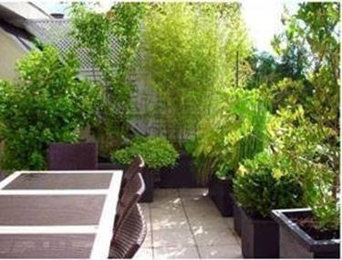 piante per terrazzo esposto a sud - Cerca con Google | GARDENING ...