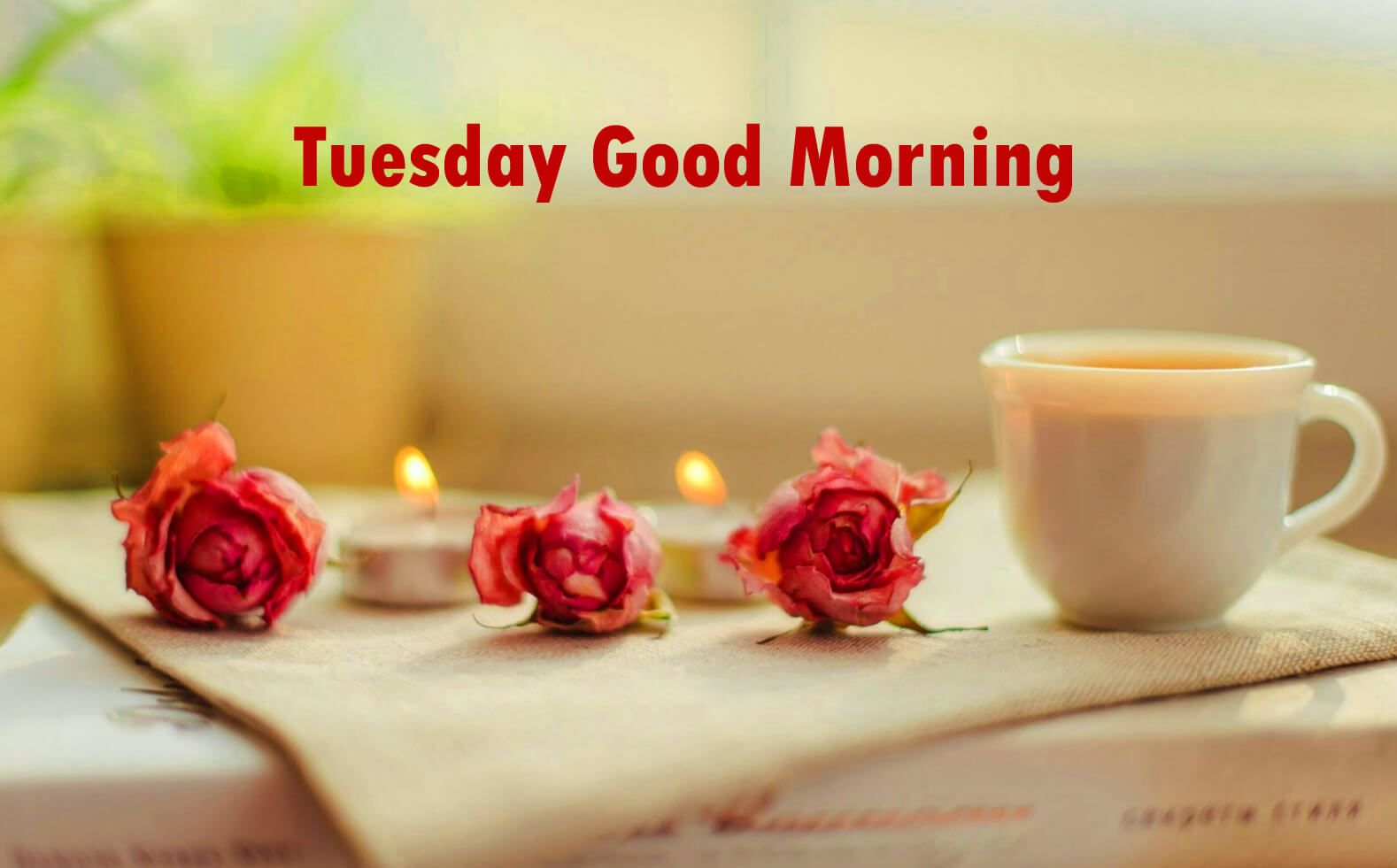 Good Morning Tuesday Wishes Quotes Images Messages For Your Loved