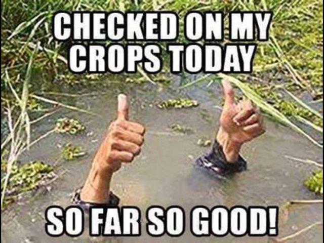 Too Much Water Kills Lol Social Work Humor Work Humor Social Work