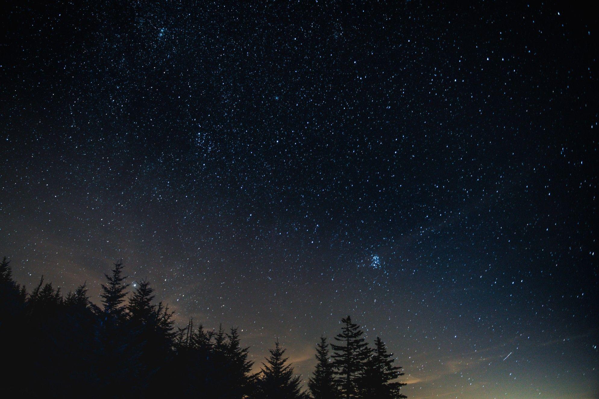 Nice View Night Landscape Silhouette Painting Pine Tree Silhouette