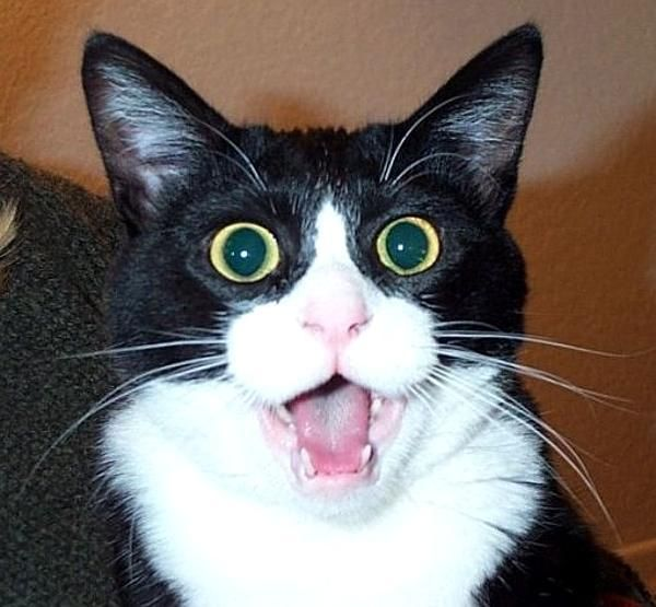 16 Cats That Look Like They've Seen a Ghost!