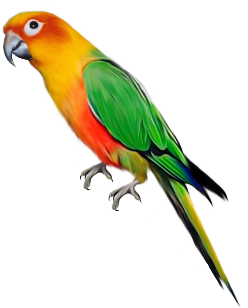Parrot Png Images Free Pictures Download Parrot Image Parrot Photo Background Images