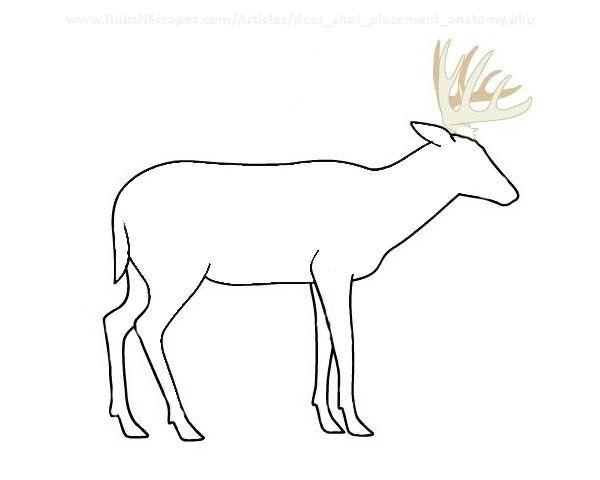 Where Do I Shoot This Deer Cars Etc Pinterest Deer Shooting