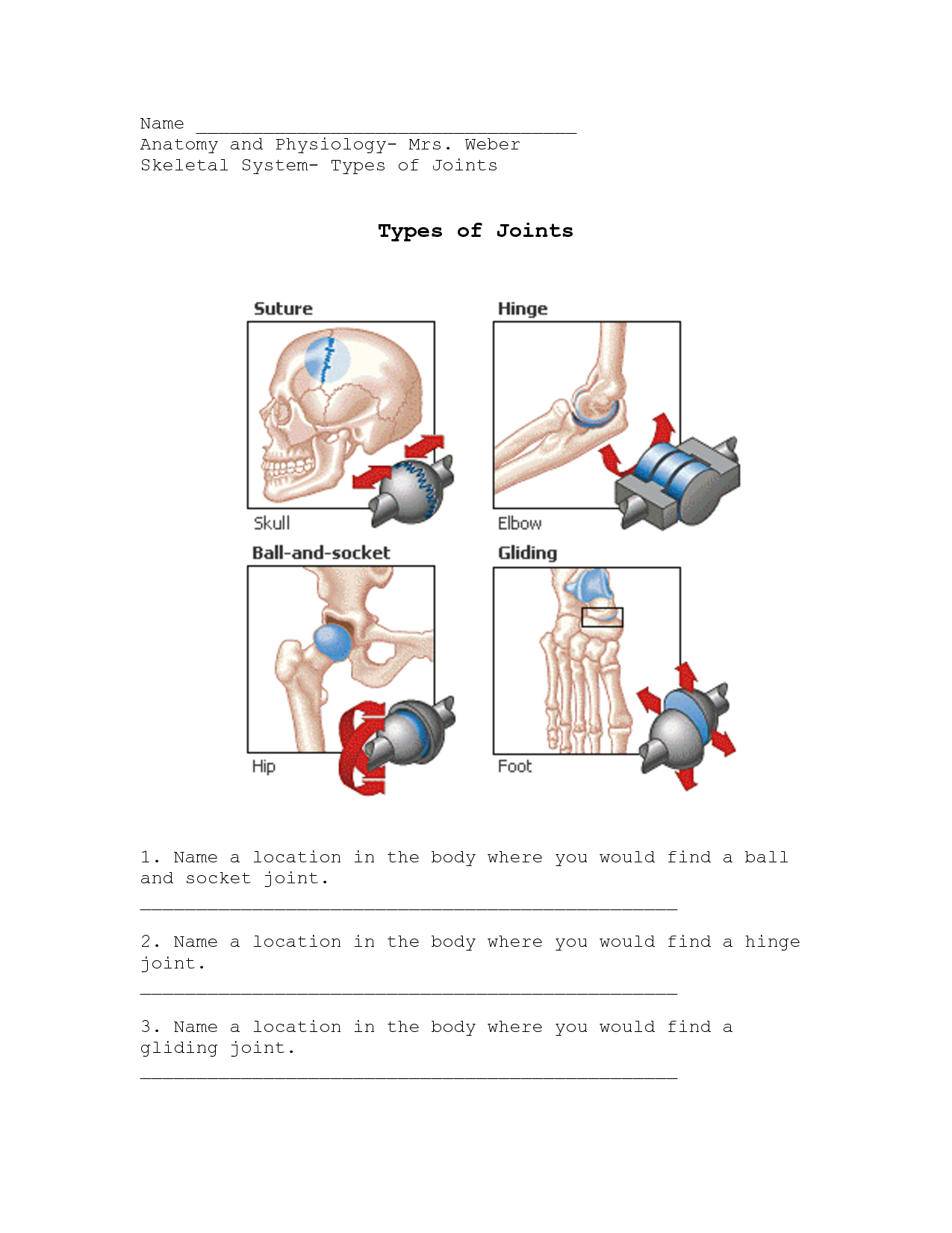 Joints Worksheet - joints, the human body, movement, muscles