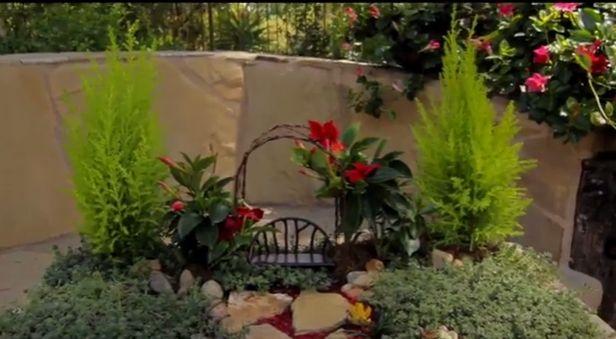 Make a Mini Garden With Sun Parasol Garden Crimson Mandevilla!