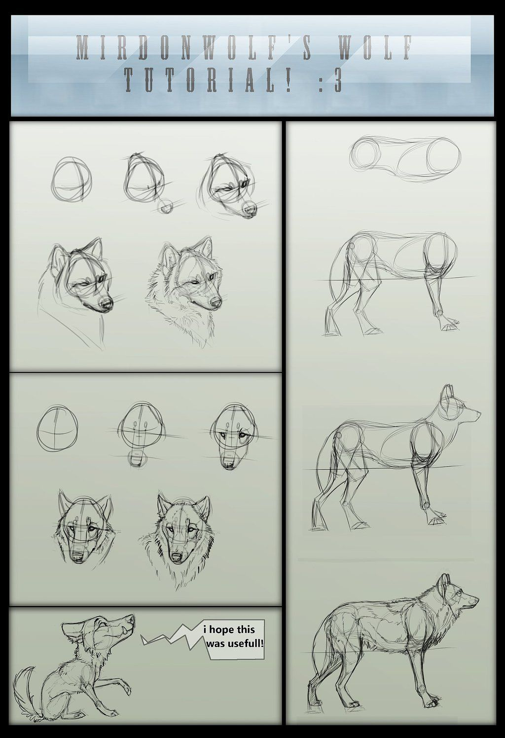 Mirdonwolf S Basic Wolf Tutorial By Mirdon Wolf Deviantart