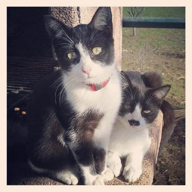 some of my cats