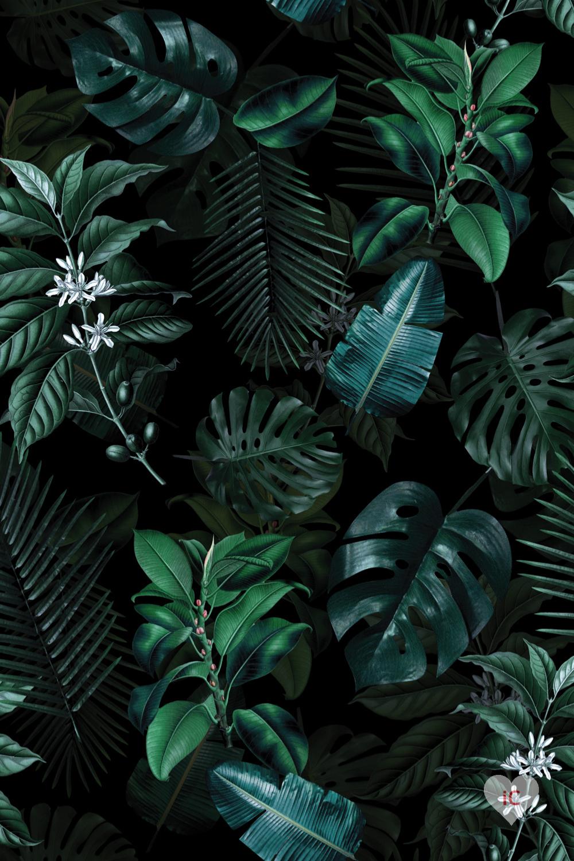 Tropical Night Garden