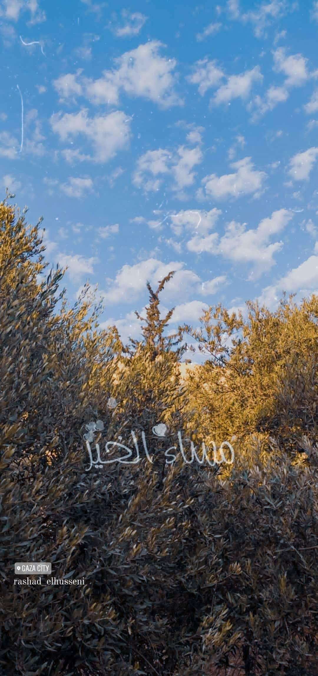 ورد أصفر طبيعة شجر اصفر غزة طبيعة جميل فلسطين القدس كلام تصوير صور ابيض صباح خير صل Instagram Nature Instagram Photo