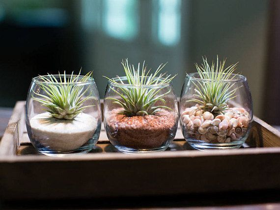 3 Tiny Terrarium Products Air Plants Plants Terrarium