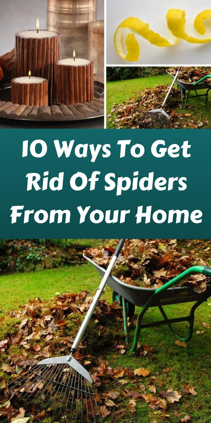8378d0a33c1611be1627286d5e28d2ba - How To Get Rid Of Spiders In Side Mirror