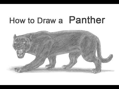 How To Draw A Black Panther Youtube Panther Panther Art Black Panther Drawing