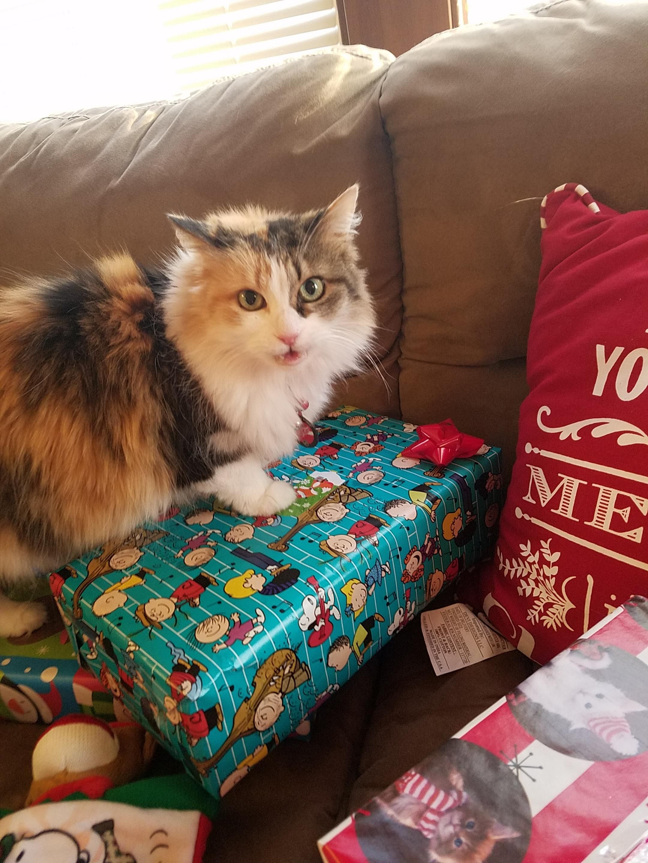 Meowy Christmas! Cute funny animals, Christmas cats