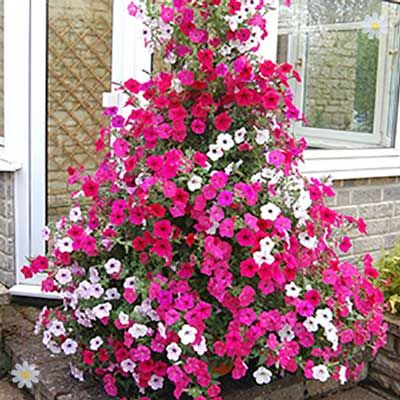 404 You Seem To Be Lost Get Garden Orchids In Uk Wave Petunias Petunias Best Potted Plants