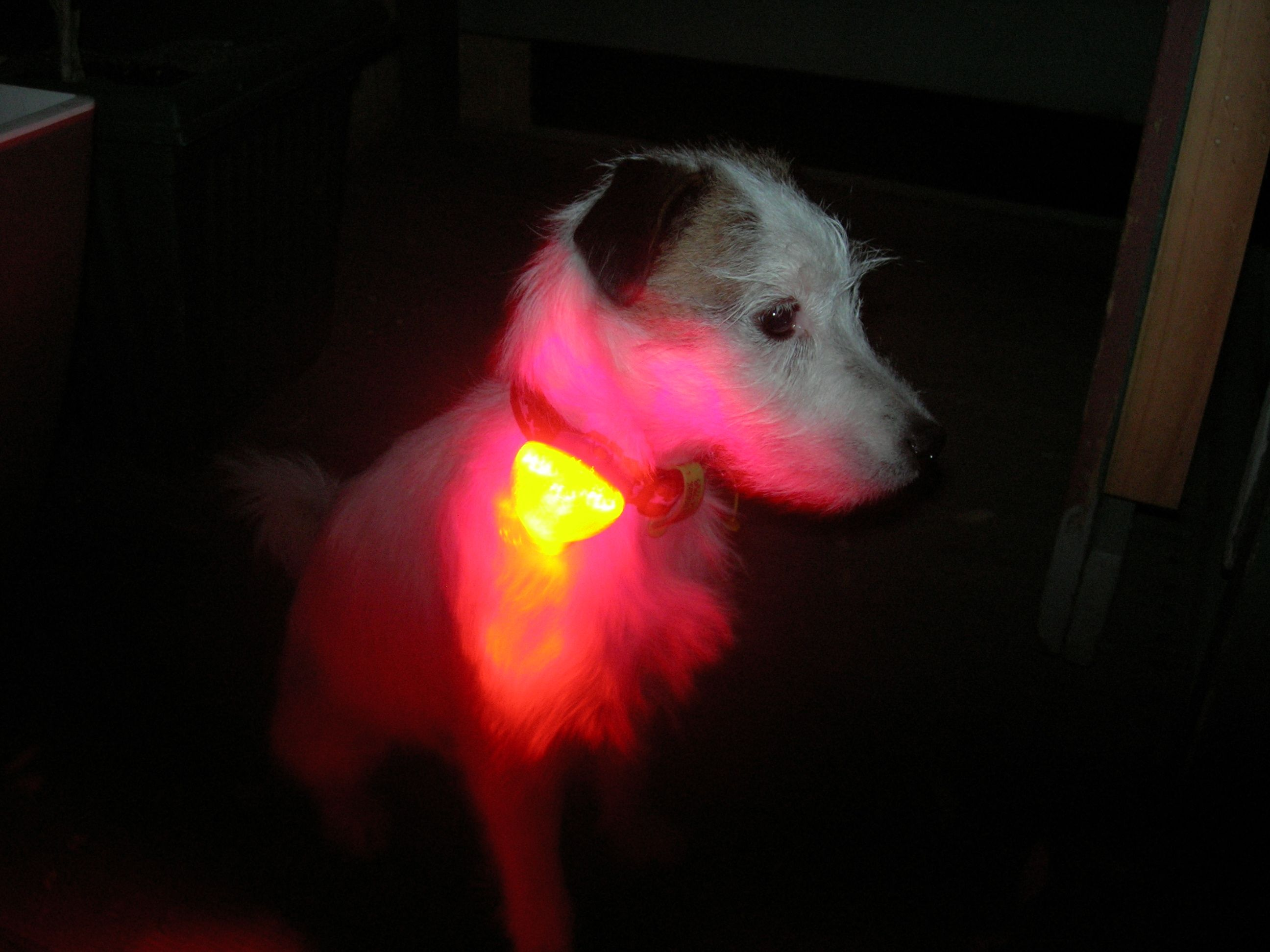Ruffwear The Beacon This Dog Tested Light Is Sturdy Compact Watertight Lightweight And Easy To Use The Beacon Clips Onto All R Dog Gear Dog Test Ruffwear
