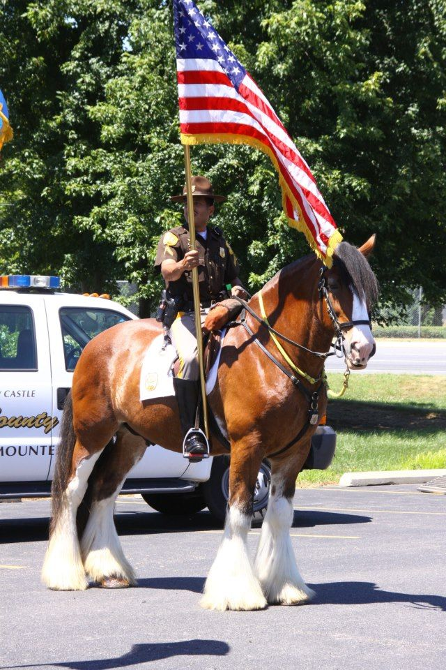 Police Horse Horse Breeds Horses Clydesdale Horses