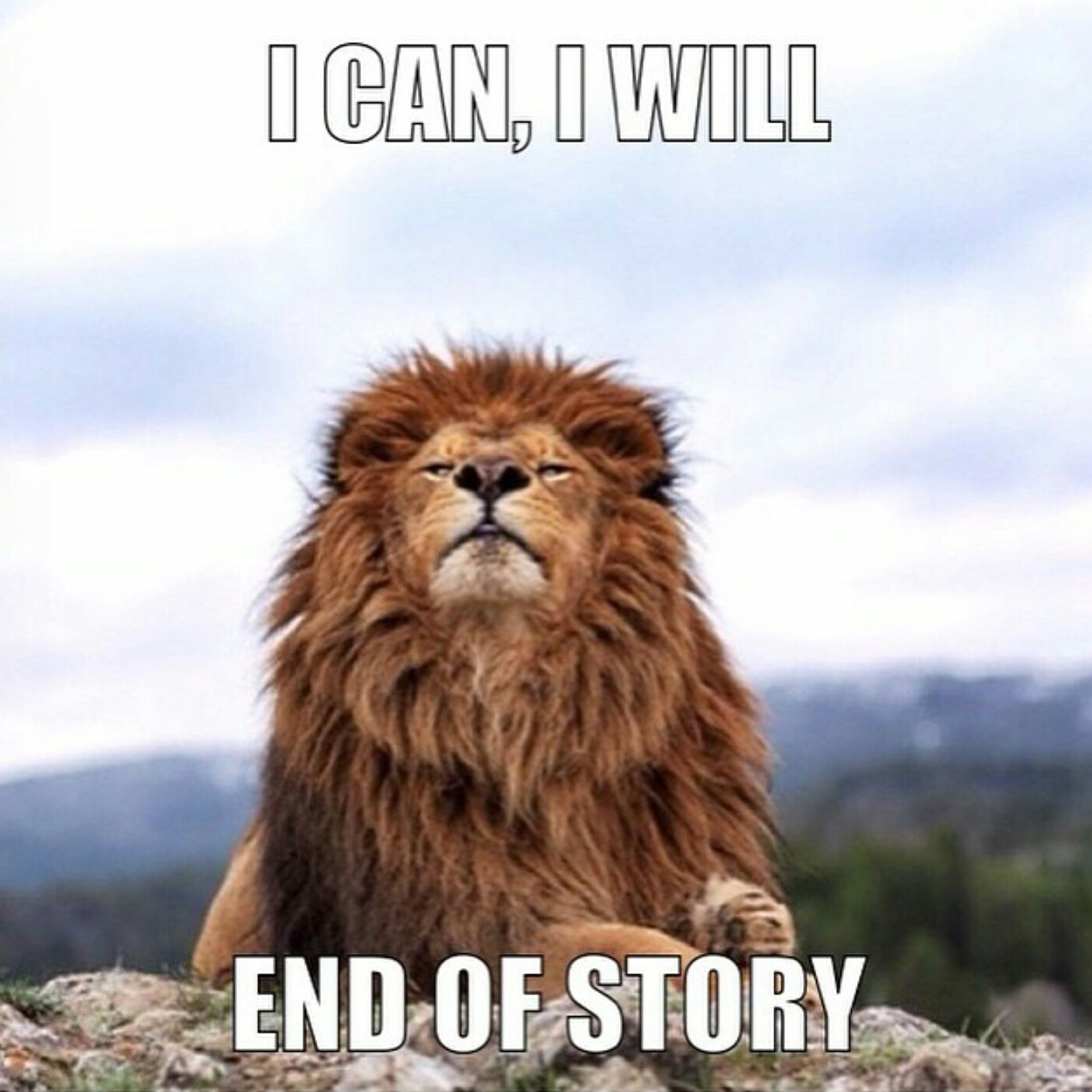 Determined Warrior Quotes Success Quotes Lion Quotes