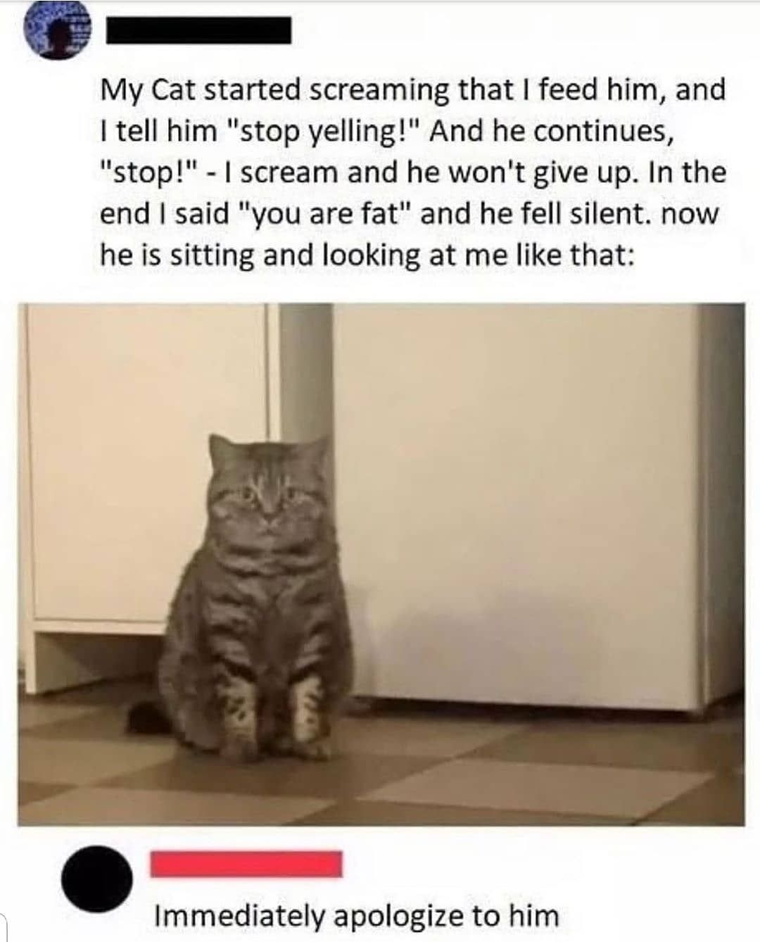 Pin By Good Vibez On Memes In 2020 Funny Animal Memes Funny Cat