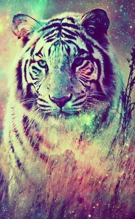 Discover And Share The Most Beautiful Images From Around The World Animal Wallpaper Tiger Pictures Big Cats Art Cool wallpapers in the world most pictures