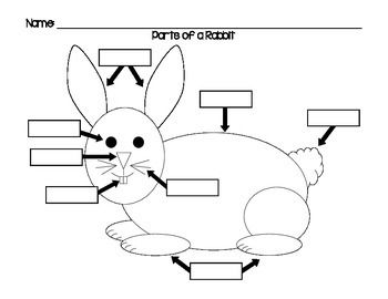 Label the parts of a rabbit using this diagram. Students
