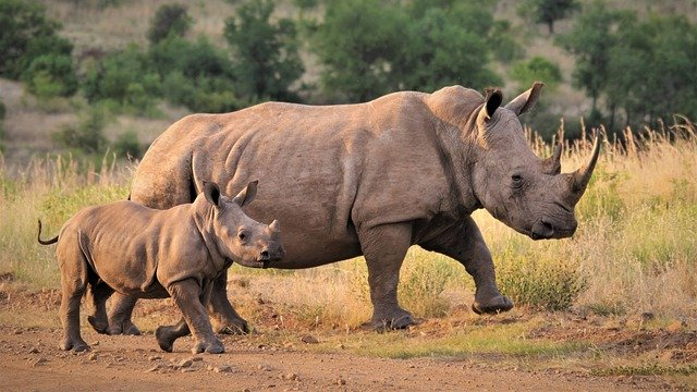 Pin on Wildlife Conservation