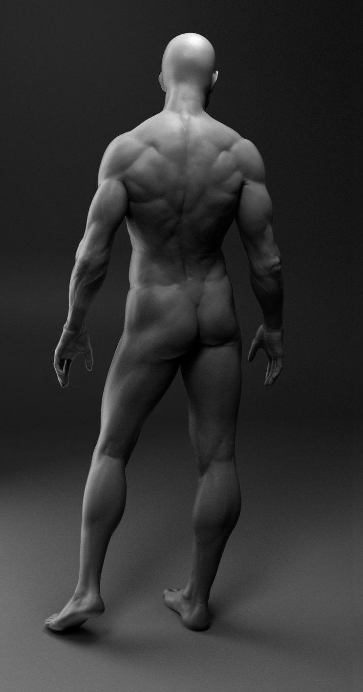 Human Anatomy Studyvray 3d Body Art Reference