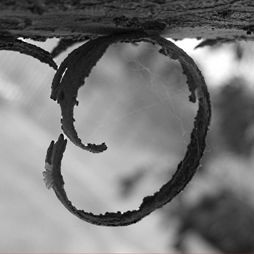 Letters In Nature Out Of Letter Photography Black And White