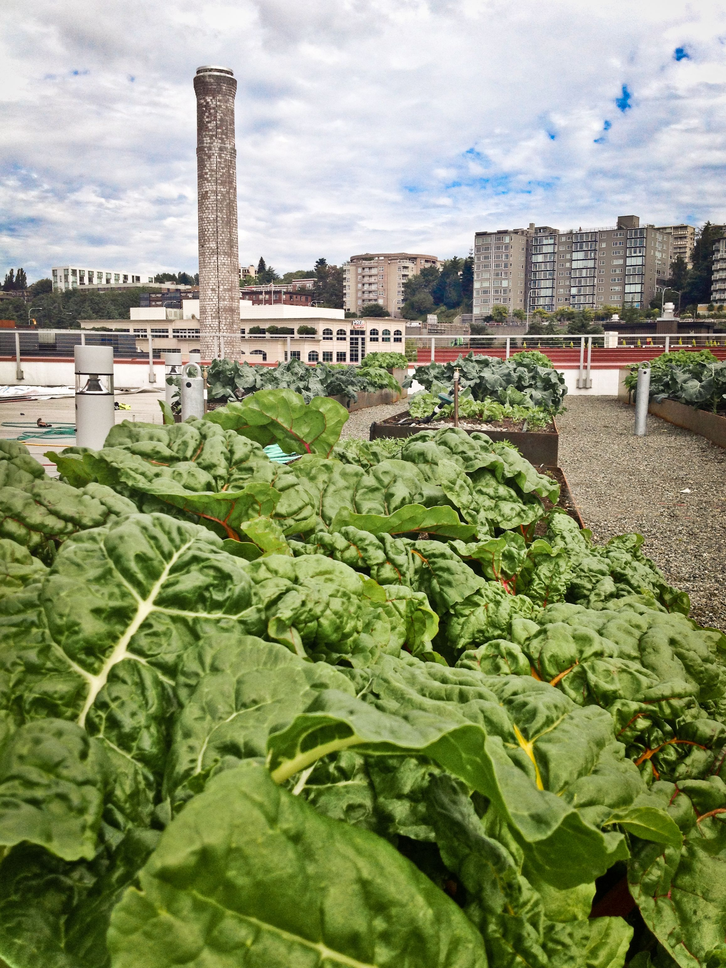 roof top urban agriculture project on