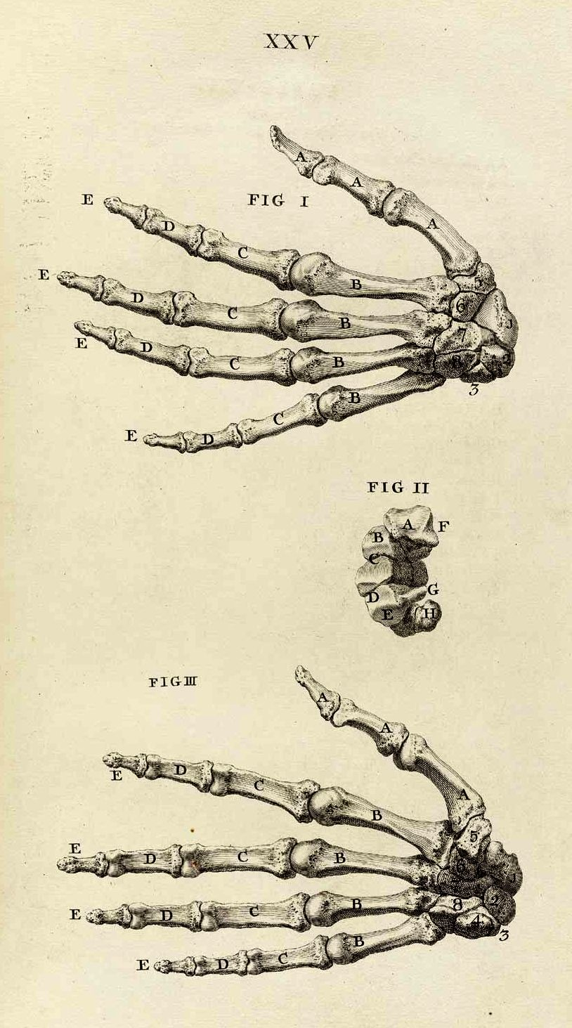 Corporisfabrica The Osteology Of The Hand And Wrist From William