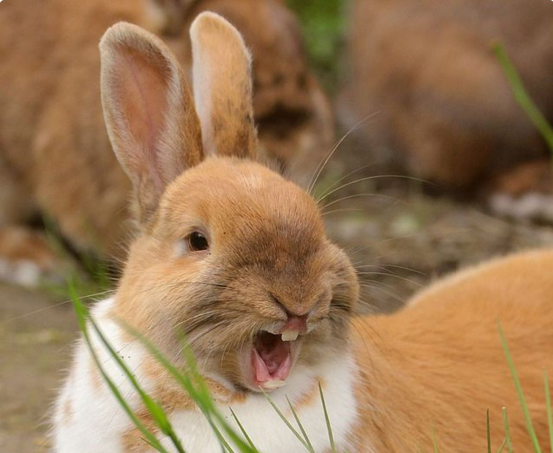Картинка кролика прикол