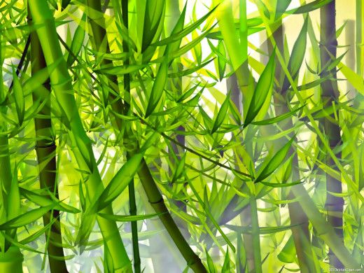 bamboo background powerpoint backgrounds pinterest powerpoint