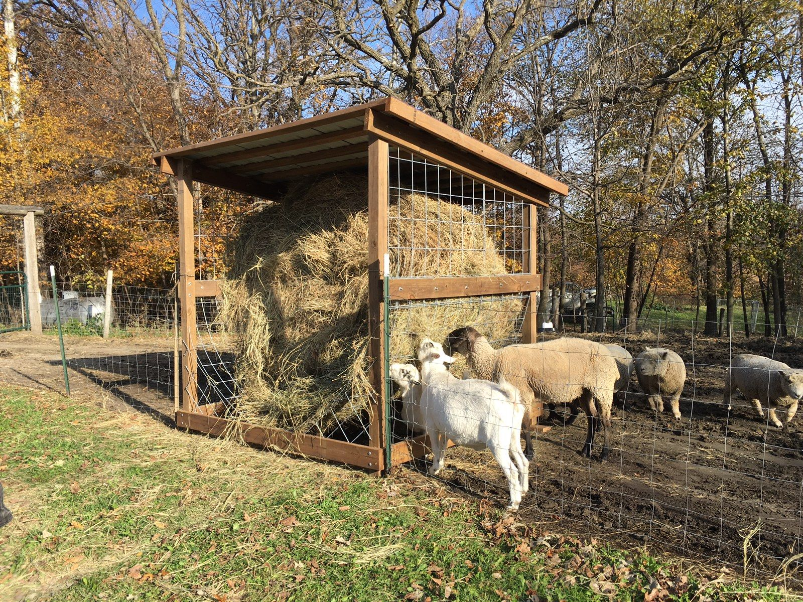 beautiful a goat hay for of feeder house plans goats new homemade
