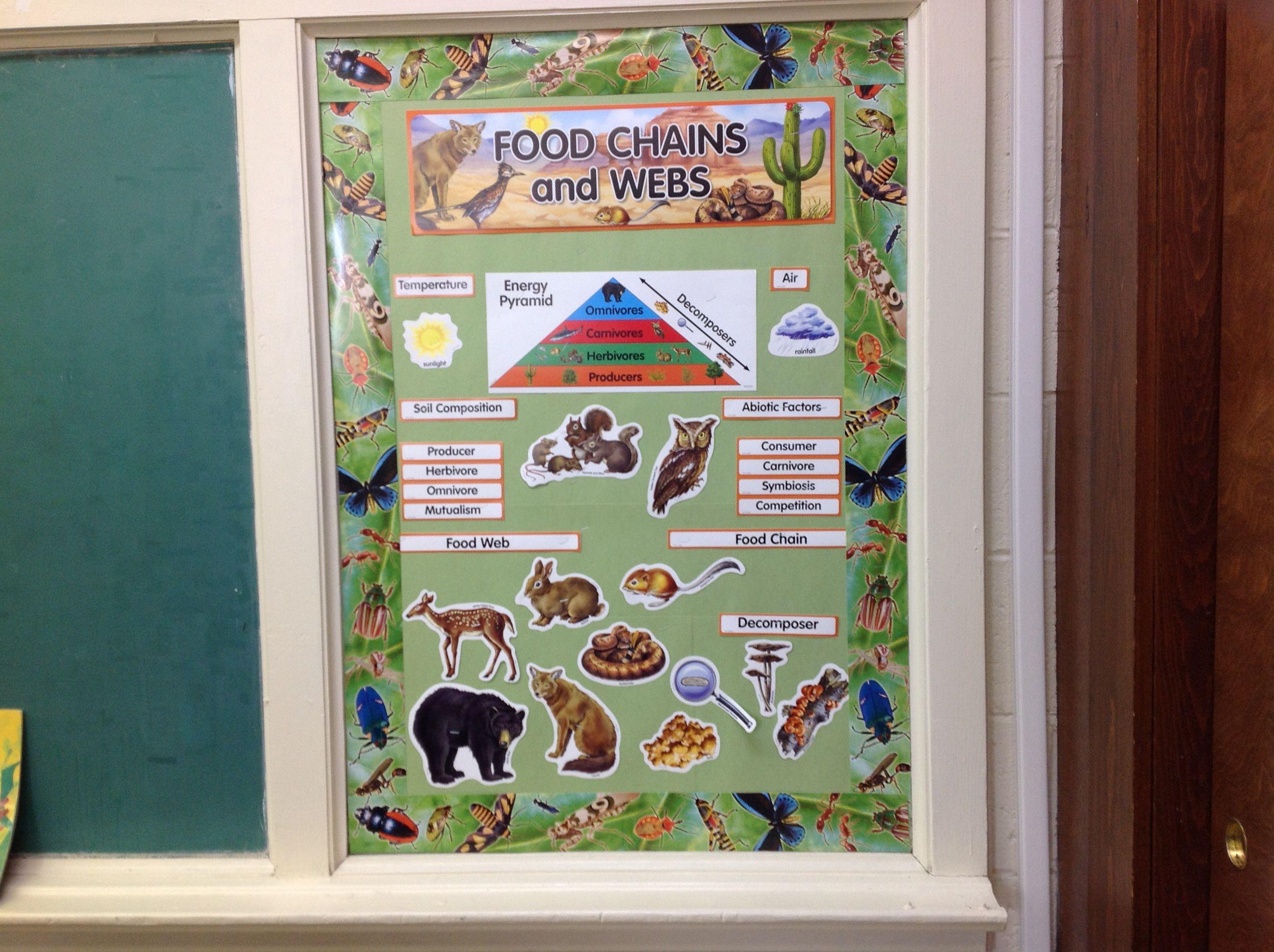Food Chain Bulletin Board