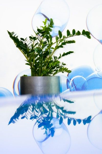 office plant displays.  Office Zamioculcas Office Plant Display Inside Office Plant Displays P