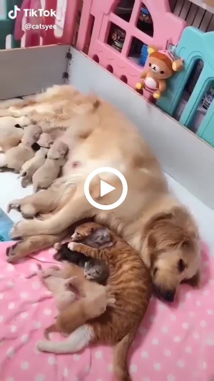 A Perfect Family Cutepets Funny Lol Cats Dogs Puppies Kittens Breastfeeding Cutest Adorable Cute Cats And Dogs Cute Baby Animals Cute Funny Animals