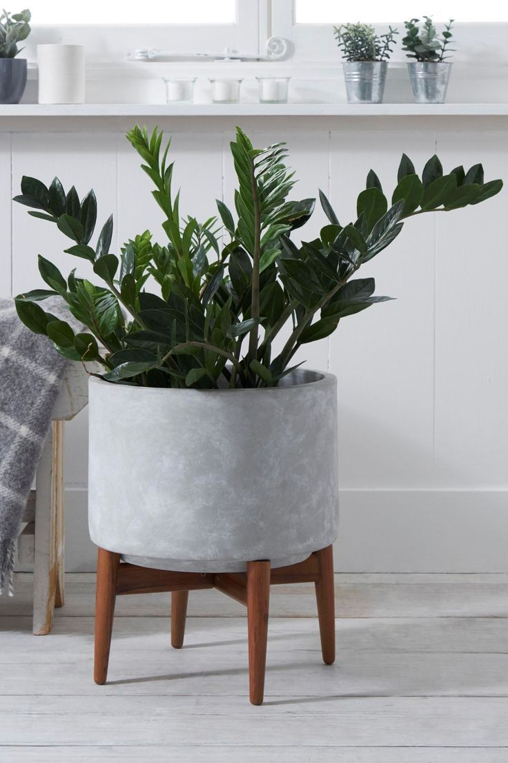 Buy Wide Concrete Planter With Wooden Legs From The Next Uk Online