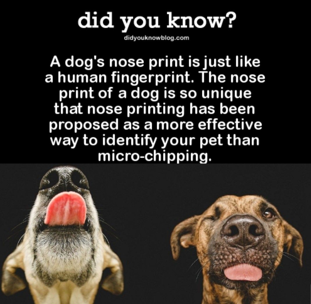 Did You Know Dog Facts Nose Print Fun