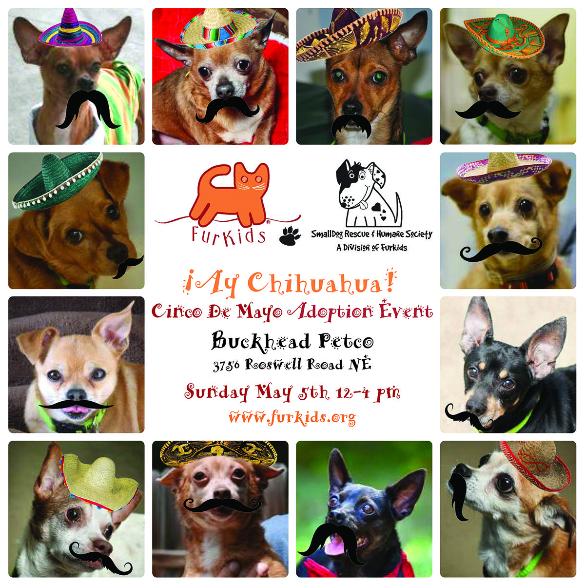 Save A Chihuahua Animals Animal Rescue Cute Animals