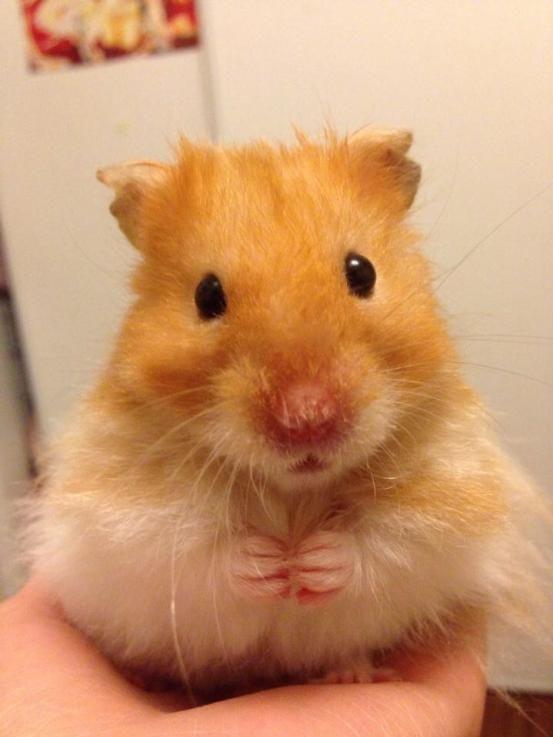 Pet Valu 4th Annual Calendar Casting Call Cute Hamsters Cute