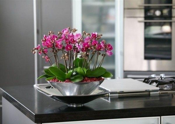 tipps orchideen pflege schale metall glanz mini blueten orchid pinterest orchideen pflege. Black Bedroom Furniture Sets. Home Design Ideas