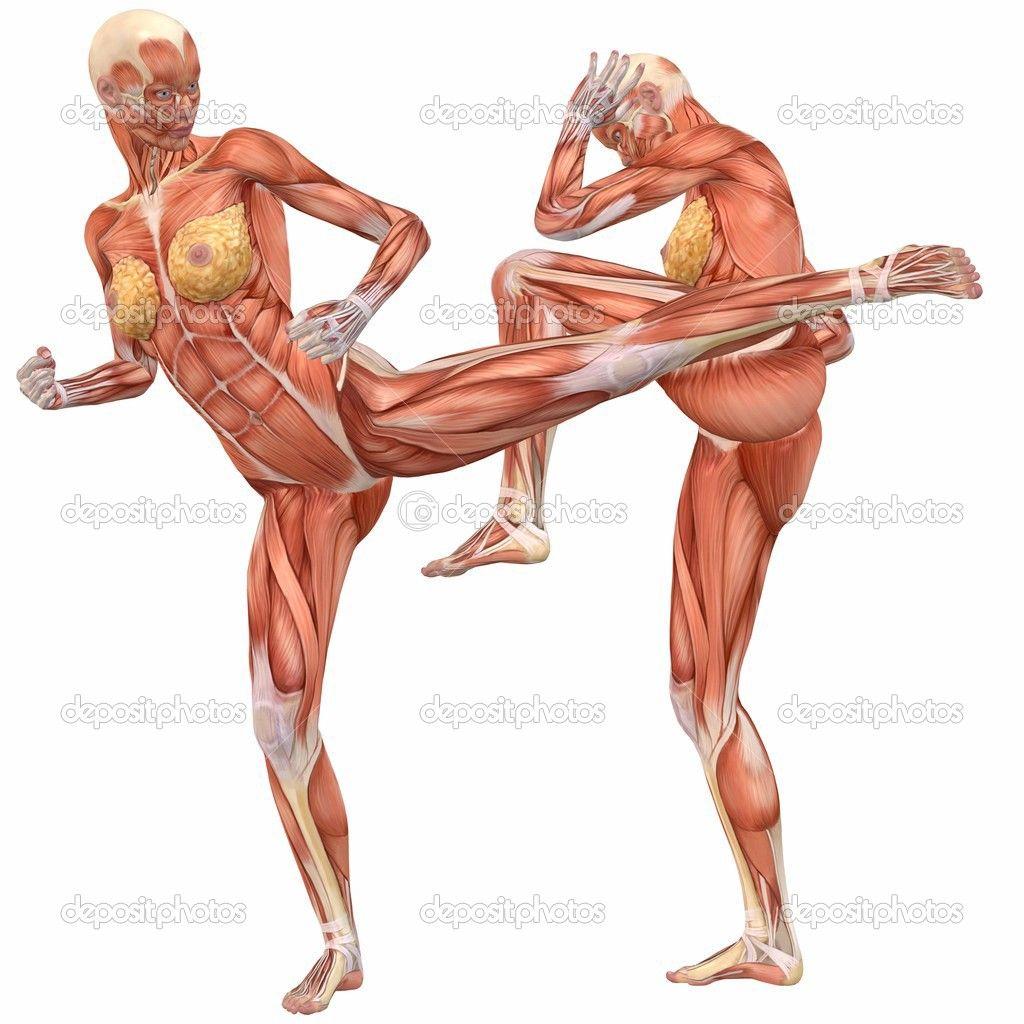 human-anatomy-female-abdomen-116.jpg (1024×1024)   Ref - Female ...