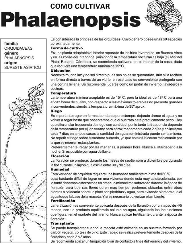 Fichas Técnicas Orquideas Plantas Jardin Cultivo De