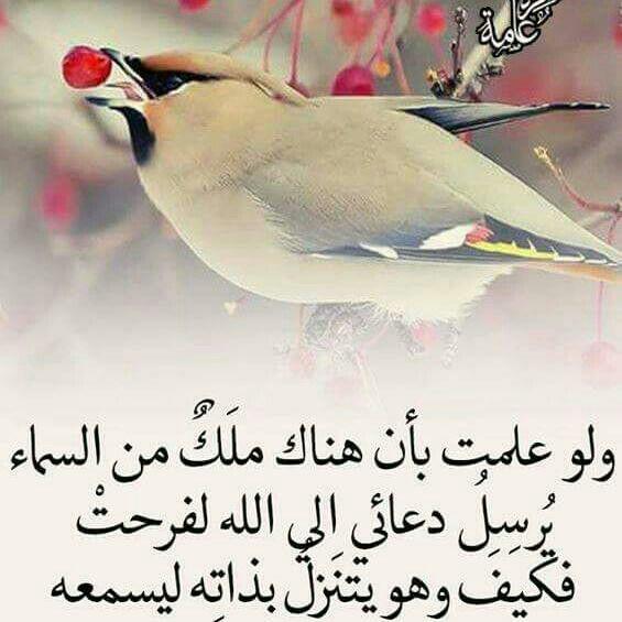 الثلث الأخير من الليل ايمانيات Islamic Art Arabic Quotes Prayers
