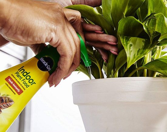 15 Things You Are Doing Wrong That Are Killing Your Houseplants