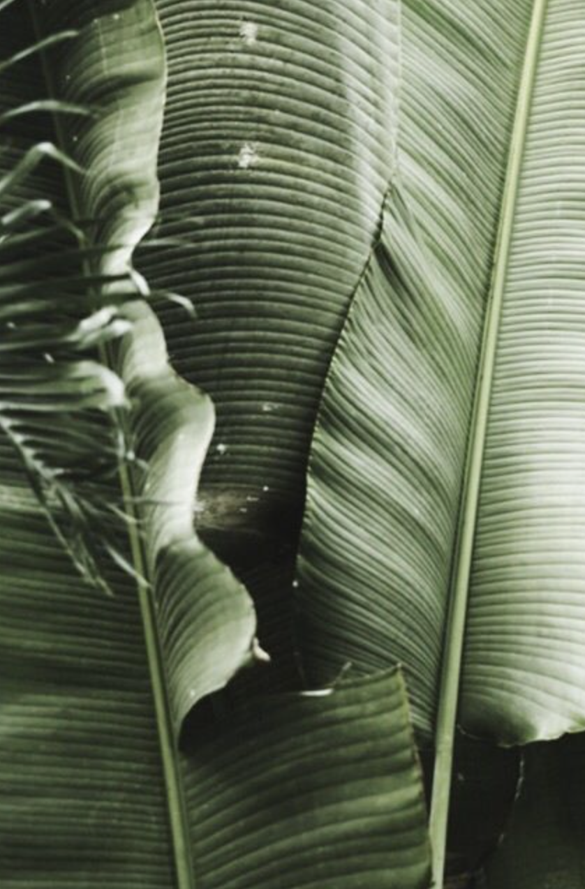 Palm leaves palm tree aesthetic banana leaf