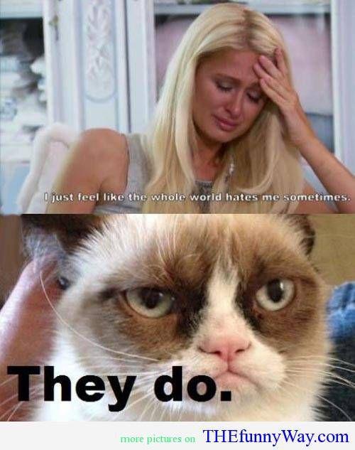 grumpy cat quotes   grumpy cat quotes - Google Search   We ...
