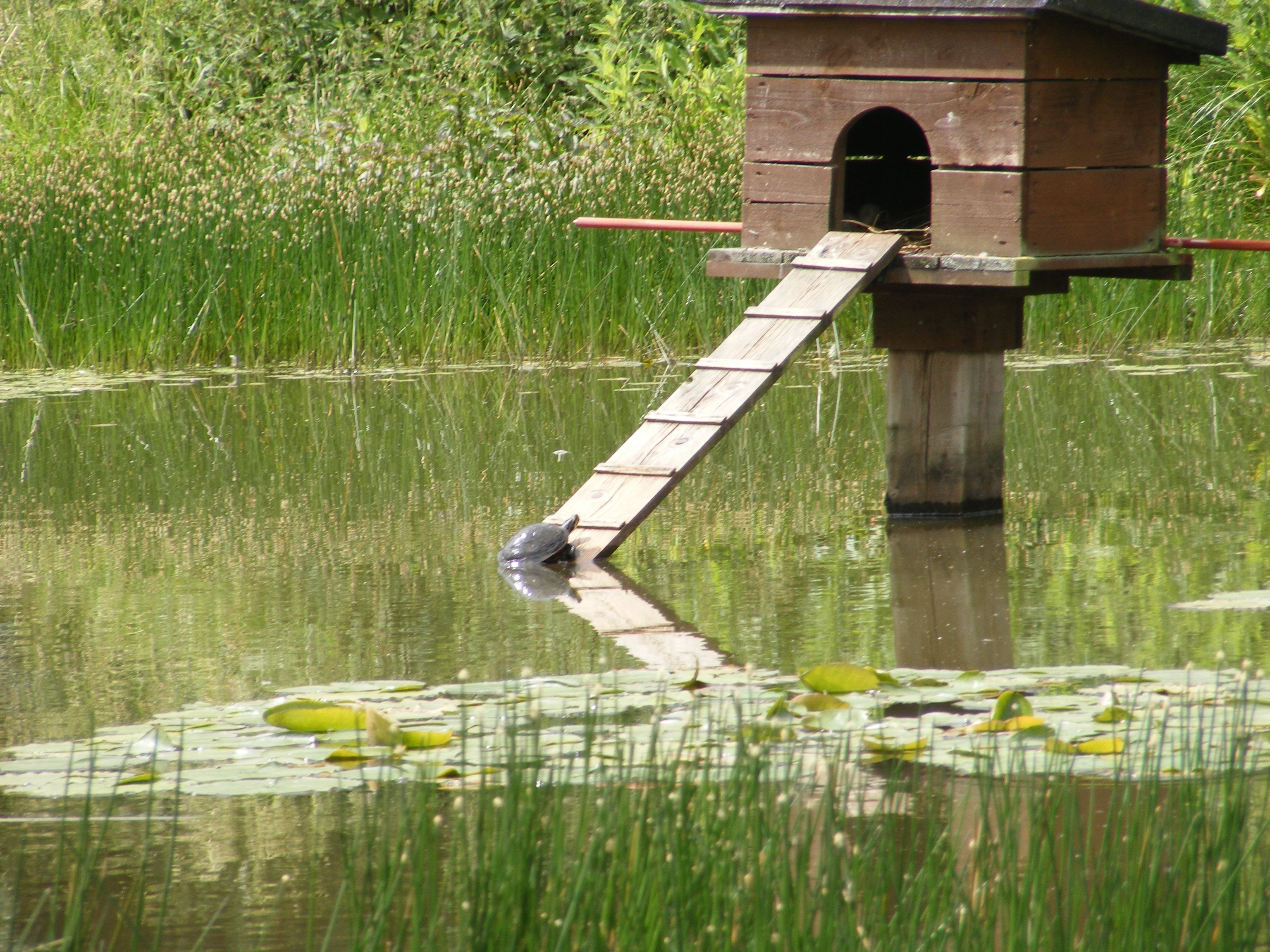 duck houses on ponds tags terrapin duck house pond nature duck