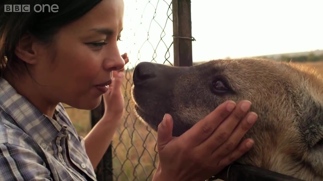 Animal Odd Couples Youtube wildlife biologist liz bonnin and a hyena. animal odd