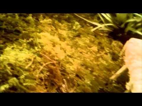 ▶ NocheRábanos1.wmv - YouTube