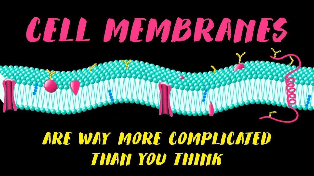 Cell membranes are way more complicated than you think